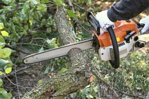 EGO Power+ Cordless Chain Saw